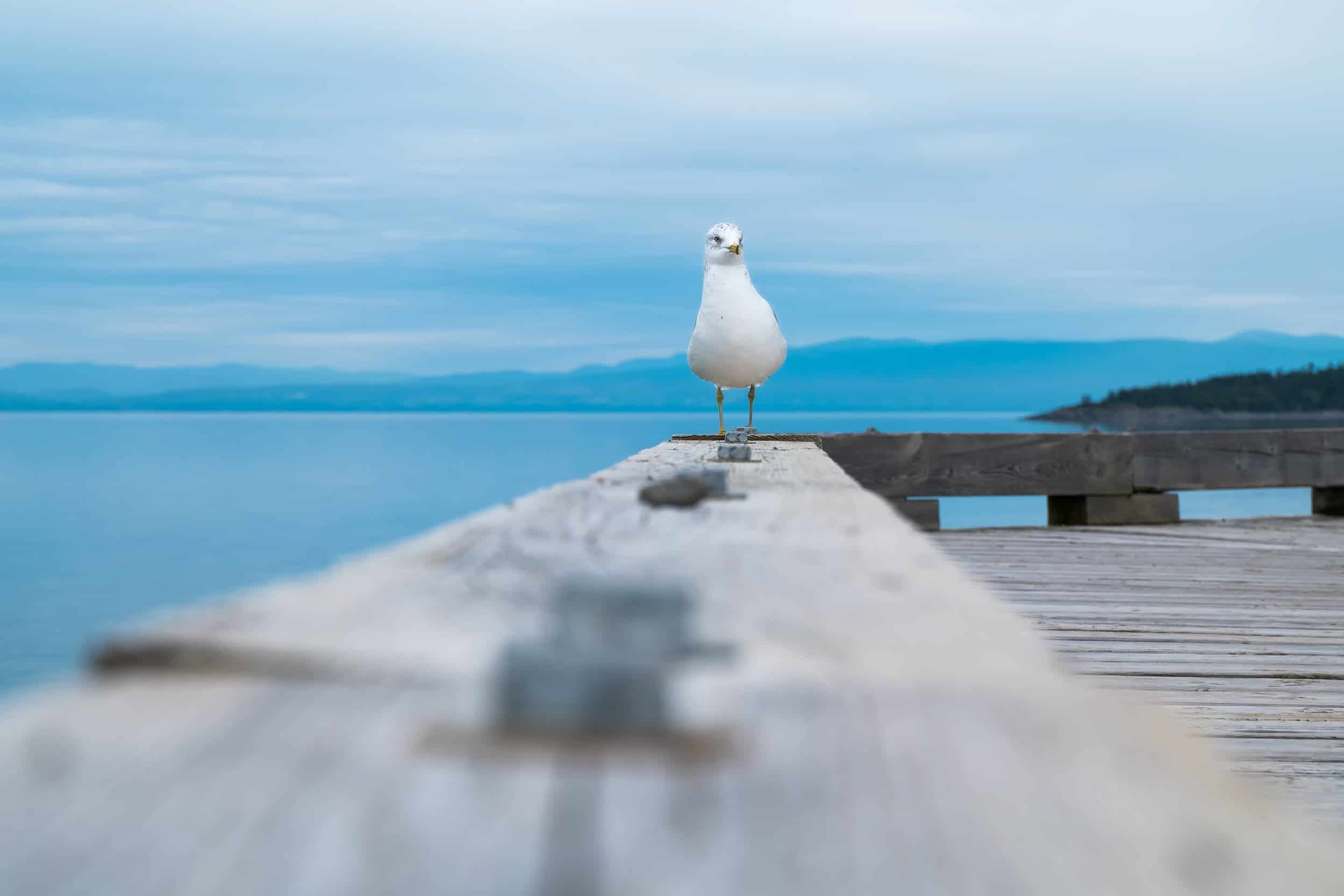 A seagull by the sea in canada